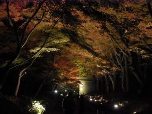 上田城の紅葉(夜景)